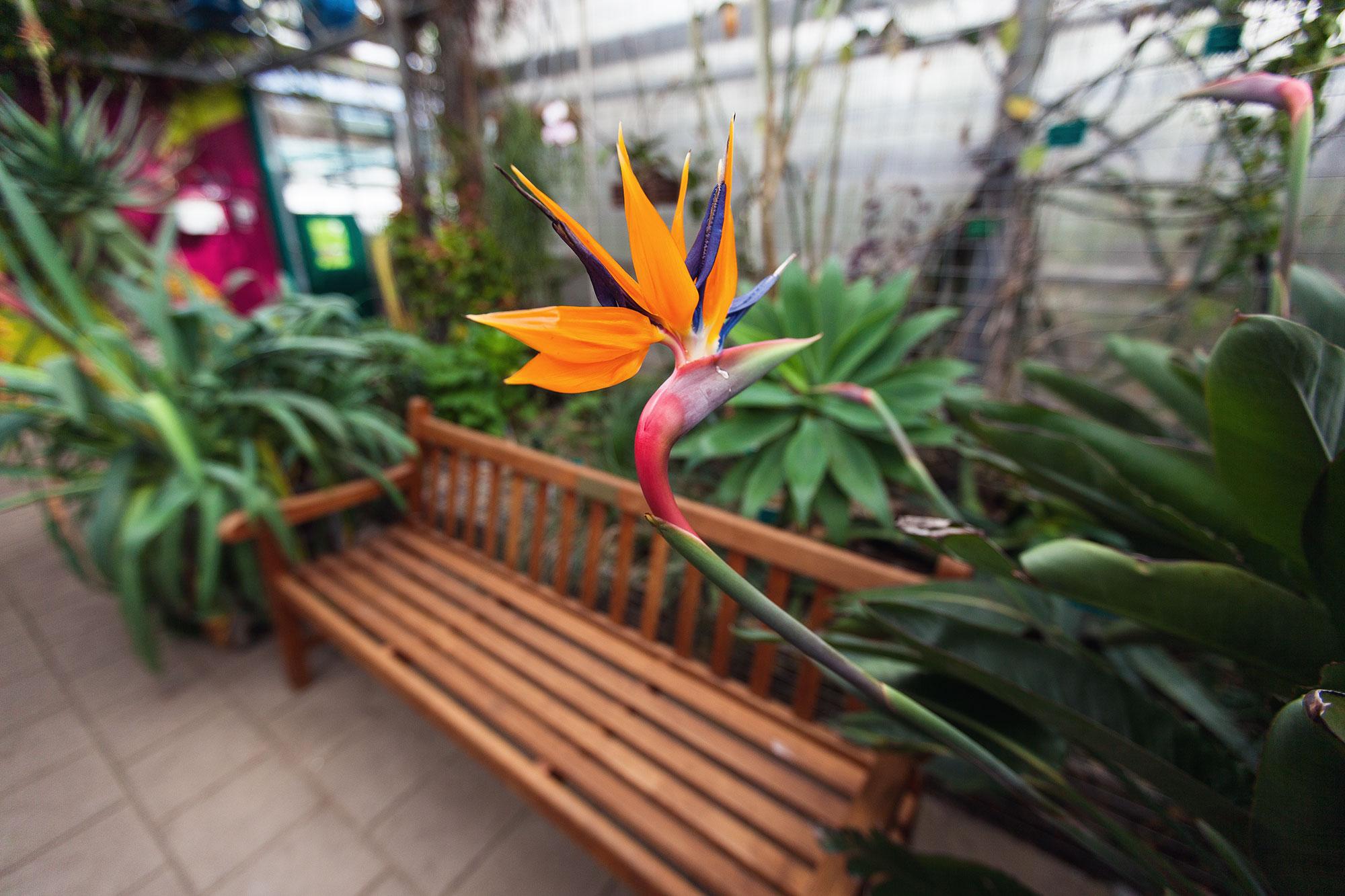 botanische tuin uithof